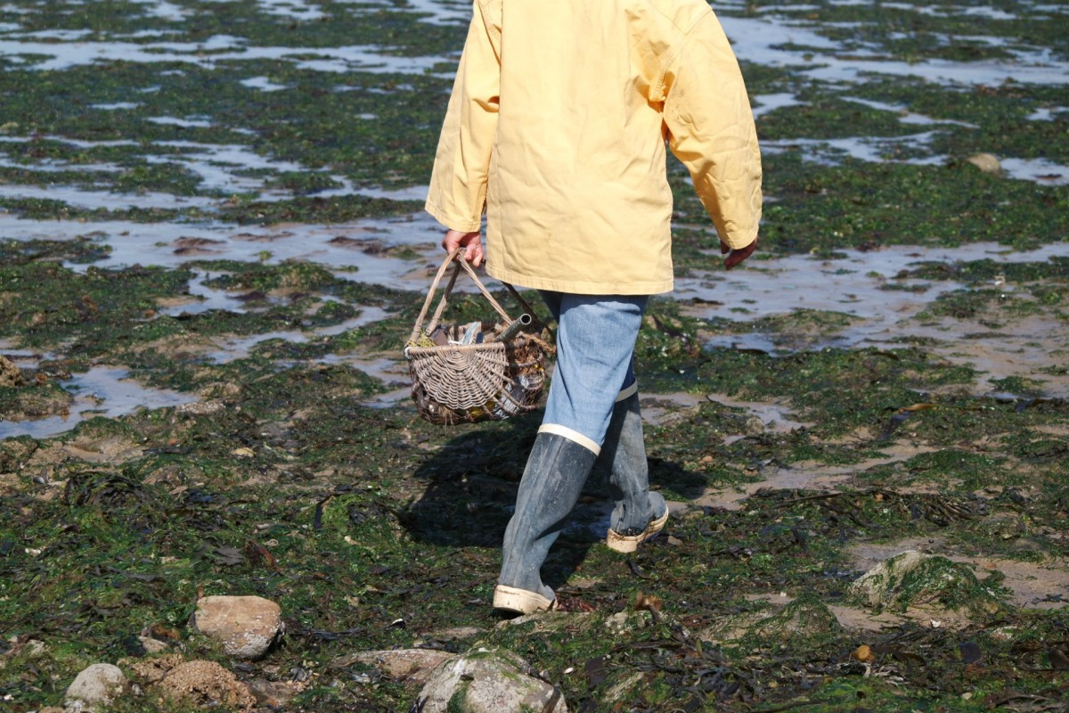Gathering shellfish on foot