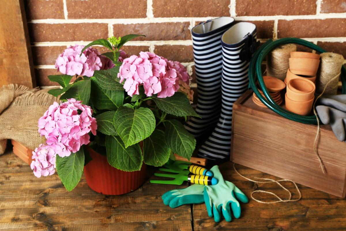 Fleuristes - Jardineries - Soin des animaux à Saint-Lyphard