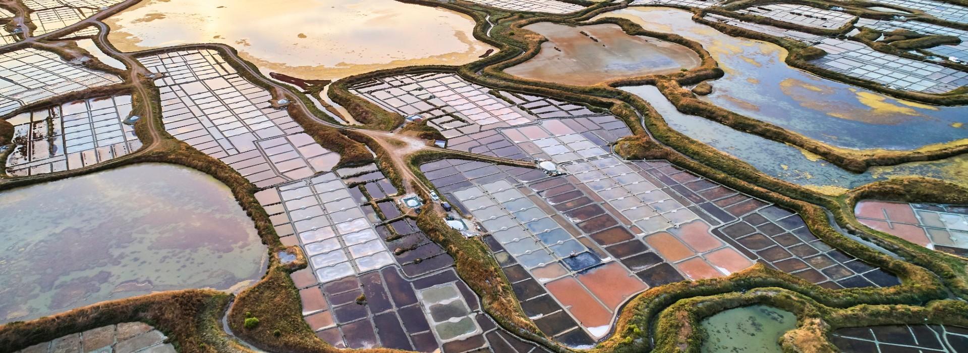Marais salants de Guérande - Mosaïque de couleurs - Alexandre Lamoureux