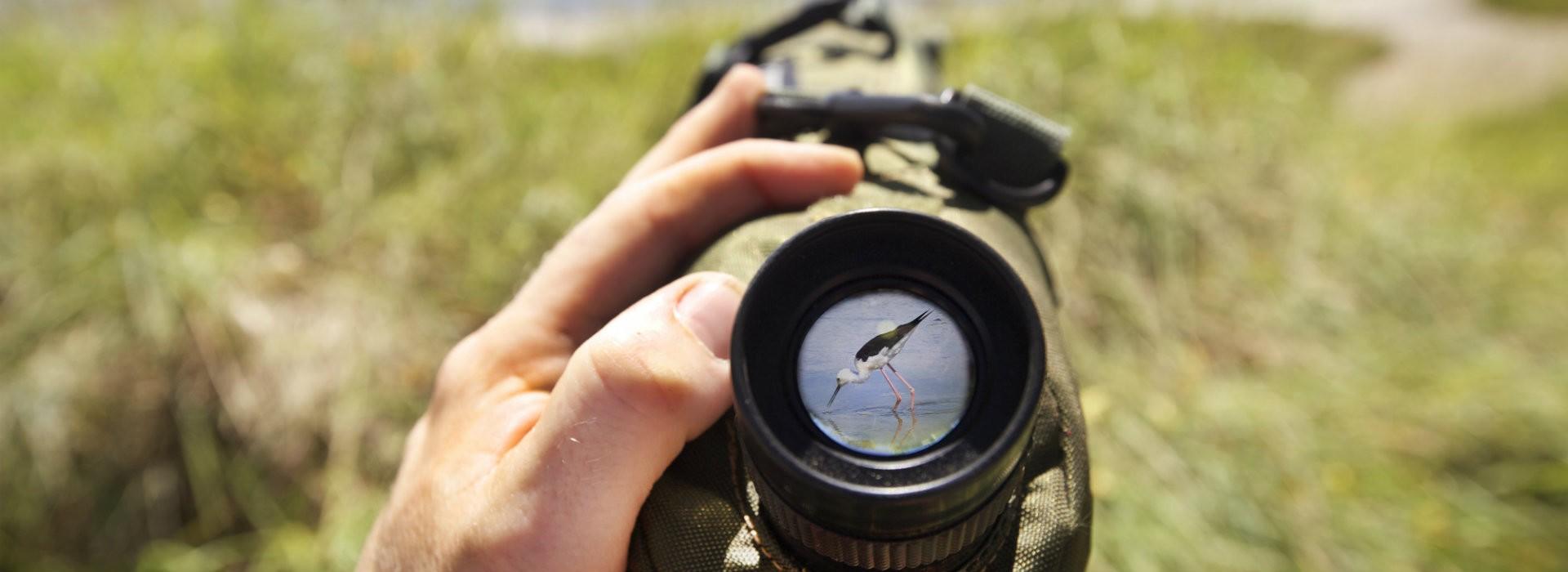 Le traict du Rostu, site privilégié pour observer les oiseaux - Teddy Locquard