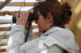 Vogelbeobachtung in der Naturschutzzone Pierre Constant im Regionalpark La Brière