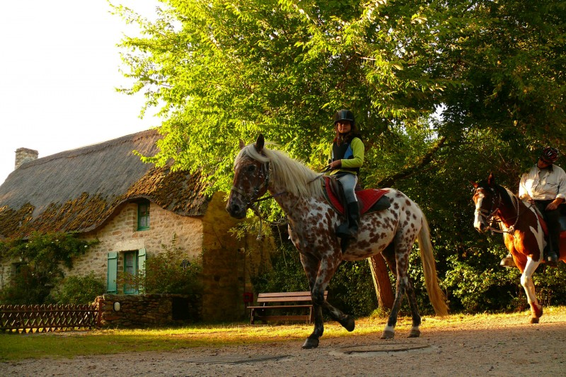 A cheval en Brière