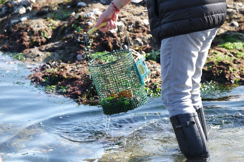 Today I picked Breton seaweeds and found myself in Japan!