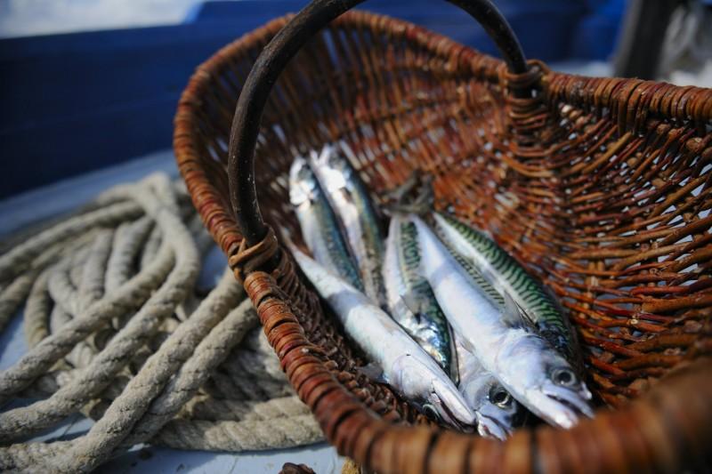 La Turballe et la sardine, une longue histoire- CRT Bretagne - Gladu Ronan