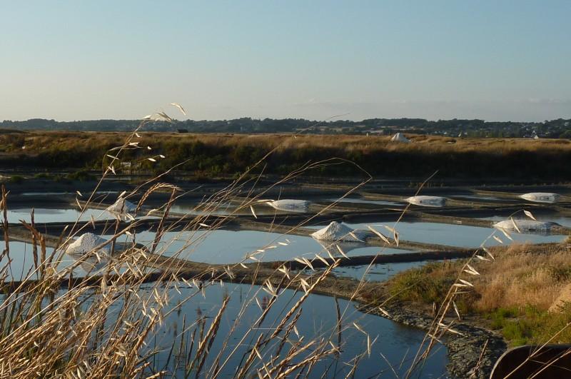 The salt marshes of Guérande