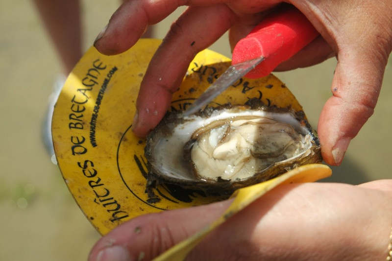 Coquillages et crustacés... en baie de Pen Bé - OTI La Baule-Presqu'île de Guérande