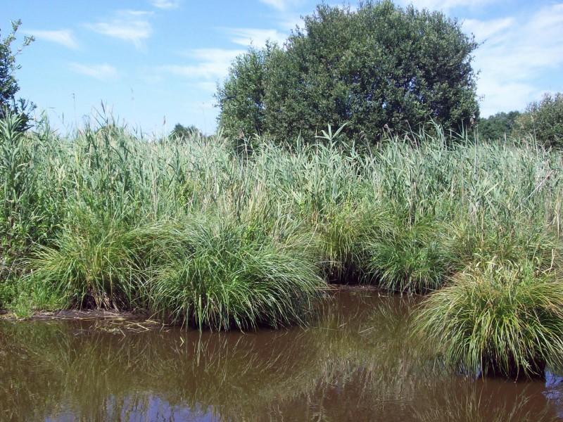 Canal de Nantes à Brest - balade en juin
