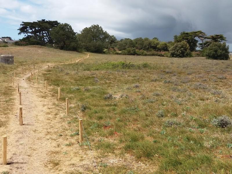 chemin-dune-de-la-falaise-batz-sur-mer-712