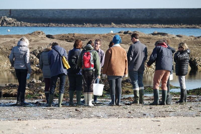 Cueillette d'algues au Croisic