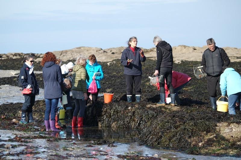 Participants à la cueillette d'algues au Croisic