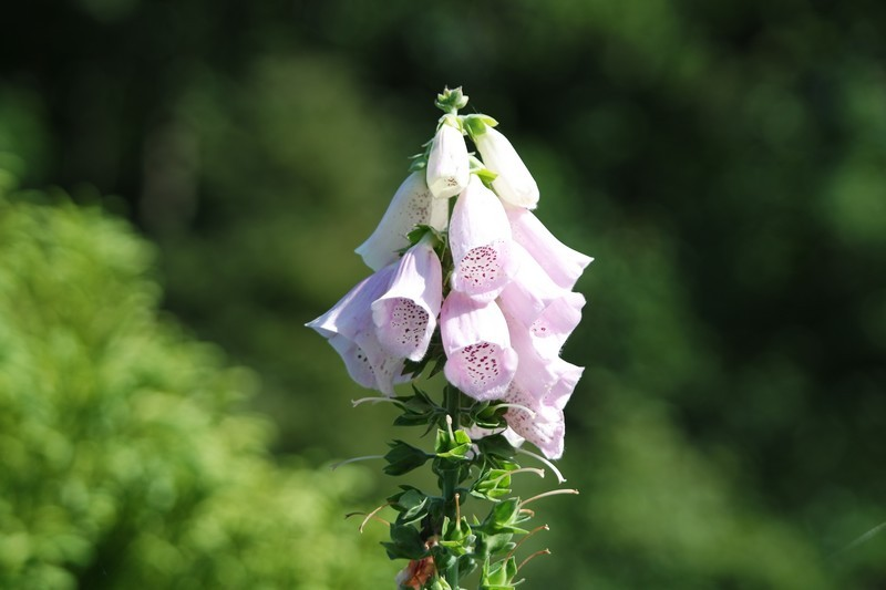 Fleurs des Jardins des Marais à Herbignac