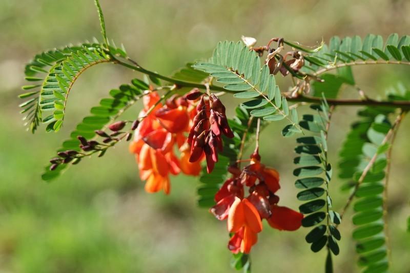 Fleurs du parc du Moulin de Kergas