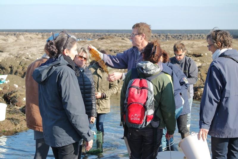 Groupe sortie cueillette d'algues au Croisic