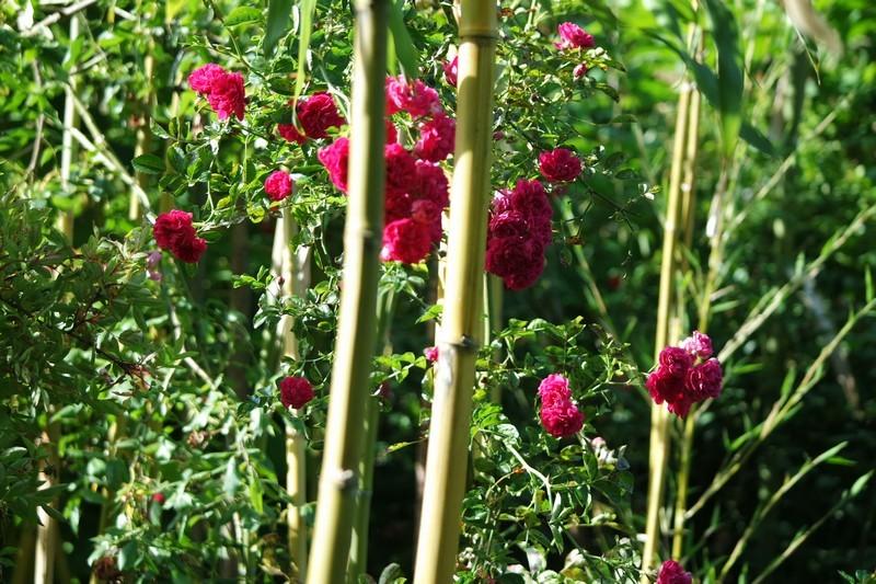 Jardins des Marais à Herbignac