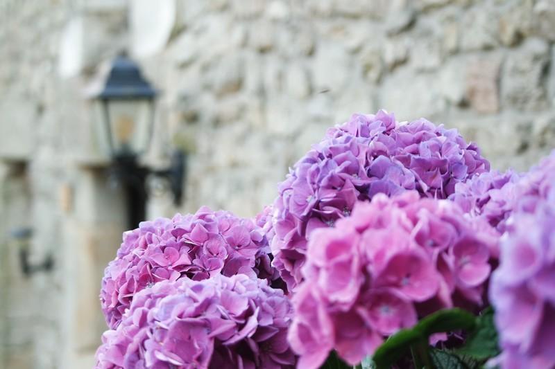 La Roche Bernard, jolie cité fleurie