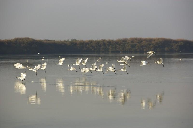 Oiseaux dans les marais salants