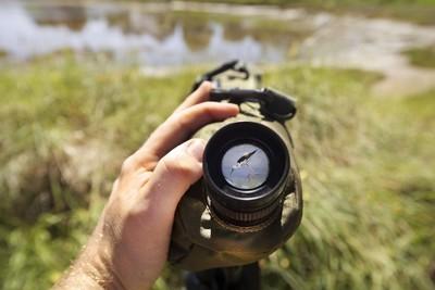 Mesquer observation des oiseaux
