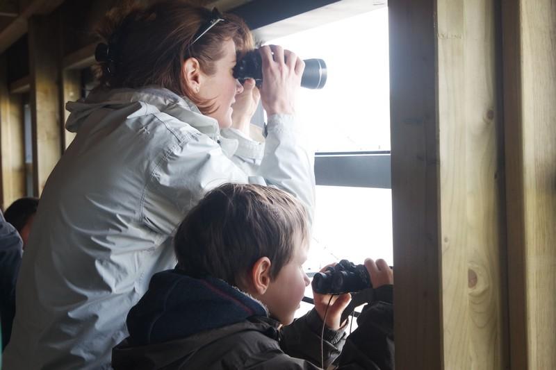 Observation des oiseaux à la Réserve naturelle régionale Pierre Constant
