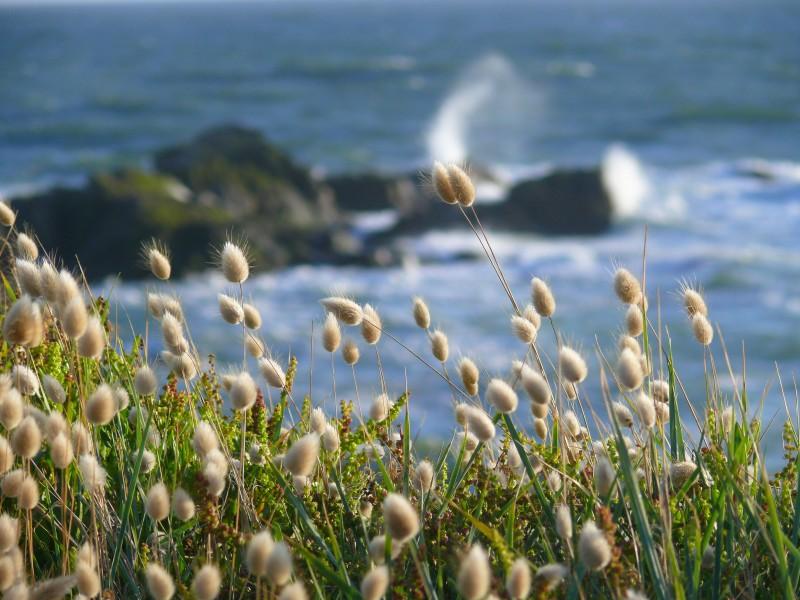 Océan Atlantique - balade sur la Côte sauvage