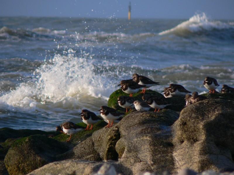 Oiseaux bord de mer Bretagne Plein Sud