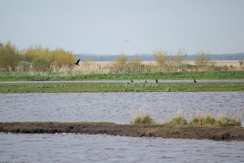 Oiseaux de la Réserve naturelle régionale du marais de Brière