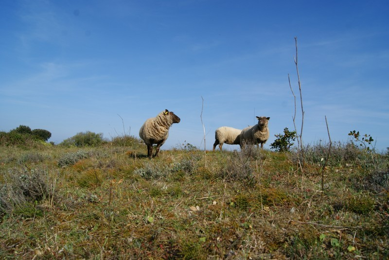 paturage-moutons-juliette-martin-719
