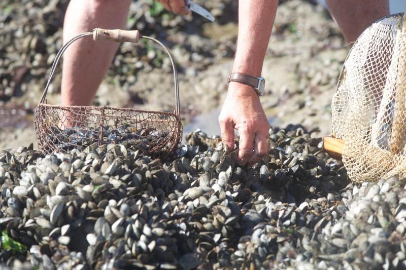 Pêche à pied en Bretagne Plein Sud - La Baule