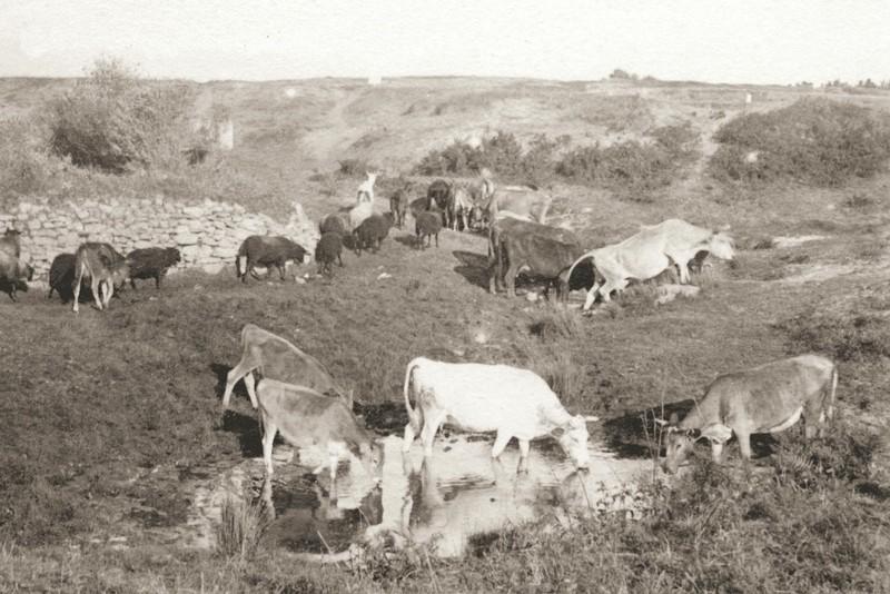 Photo début 20è siècle - Dune de la Falaise