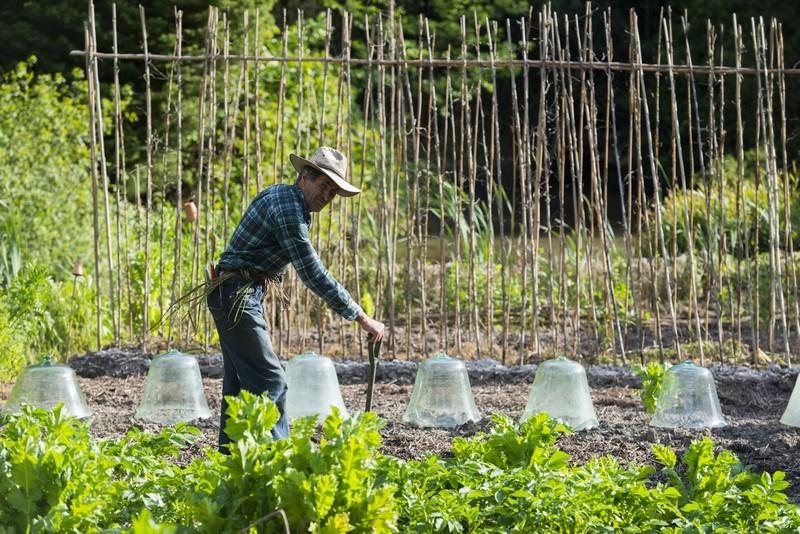 Potager du Jardin des Marais à Herbignac