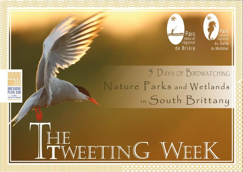 The Tweeting Week