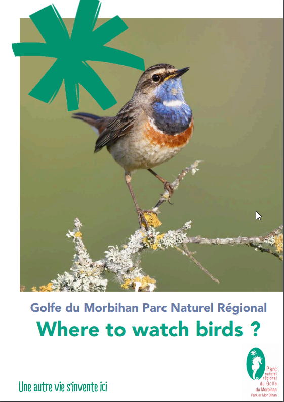 Where to watch birds in the Gulf of Morbihan Nature Park?