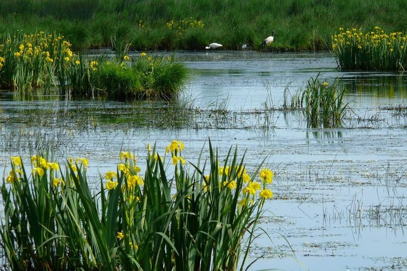 Zone humide en Bretagne Plein Sud