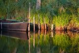 Ambiance des marais - crédit photo : B Schoch