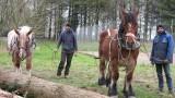 Amis des Sites de Mesquer - Laurent Legal et Eric Vaillant, les vertus du débardage avec cheval