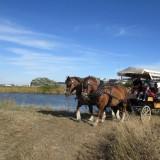 Balade dans les marais salants au départ de Batz sur Mer - La P'tite Ferme de Mélie