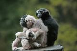 Branféré - Parc animalier - Le Guerno