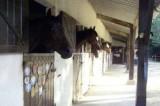 Centre équestre et poney club du Bel Air - Mesquer Quimiac - Box à chevaux