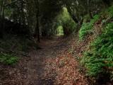 Chemin creux - Le Drezeux