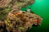 Cooleur Plongée - Piriac Sur Mer