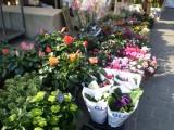 copie-de-fleurs-442031