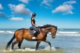 equitation-fileminimizer-1596345