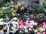 fleurs-2-442032