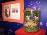 Globe rare la Maison de la Mariée Saint-Joachim Brière