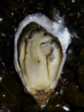 Huîtres de Josso Bretagne Plein sud Assérac