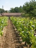 La Boutique des Producteurs à Pénestin - Vins du vignoble de Nantes