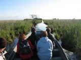 Balade en chaland dans les canaux de Brière (barque traditionnelle)