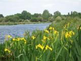 La Faune Briéronne - Promenade dans le marais de Brière - Le marais au printemps