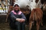 Les Veaux de Nathalie - Les-vaches sont dans le pré