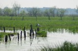 Marais de Brière