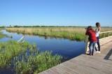 Observation à la réserve Pierre Constant